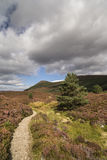 Glen Feshie in the highlands of Scotland. Glen Feshie path across heather and moor in the Cairngorms National Park of Scotland Stock Photo