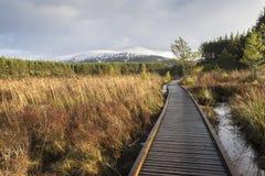 Glen Feshie im Nationalpark Cairngormss stockfoto