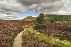Glen Feshie path across heather and moor in the highlands of Scotland. Glen Feshie path across heather and moor in the Cairngorms National Park of Scotland Stock Photography