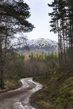 Glen Feshie track in the Cairngorms National Park of Scotland. Glen Feshie track and trees in the Cairngorms National Park of Scotland Royalty Free Stock Image