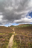 Glen Feshie track in the highlands of Scotland. Glen Feshie path across heather and moor in the Cairngorms National Park of Scotland Stock Photos