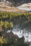 Glen Feshie track at Inshriach Forest in the Cairngorms of Scotland. Royalty Free Stock Photography