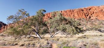 Glen Helen Waterhole Central Australia Royaltyfria Foton