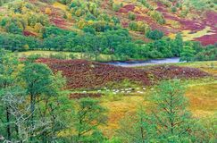 Glen Nevis  in Autumn Royalty Free Stock Image
