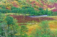 Glen Nevis  in Autumn Royalty Free Stock Image