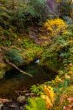 Glenariff es un valle del condado Antrim, Irlanda del Norte imagen de archivo libre de regalías