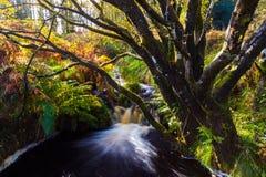 Glenariff jest doliną okręg administracyjny Antrim, Północnym - Ireland fotografia royalty free