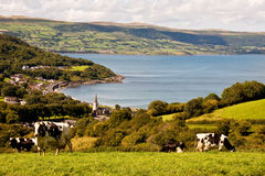 Glenarm coast. Glenarm village from above with cows close by in the field Stock Image