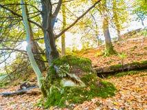 Glencree, County Wicklow, Ireland. Autumn forest. County Wicklow, Wicklow Mountains National Park, Ireland Stock Photos