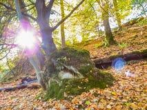 Glencree, County Wicklow, Ireland. Autumn forest. County Wicklow, Wicklow Mountains National Park, Ireland Royalty Free Stock Photos