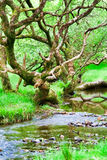 Glendalough forest Royalty Free Stock Photos