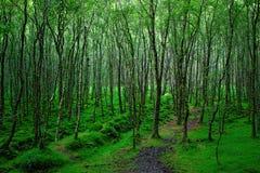Glendalough, montanhas de Wicklow, Irlanda imagem de stock
