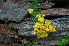 Glendalough, montanhas de Wicklow, Irlanda fotos de stock royalty free