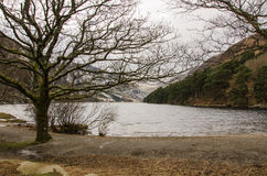 Glendalough Upper Lake Shore. This is the shore of the Upper Lake in Glendalough, Ireland Royalty Free Stock Photography