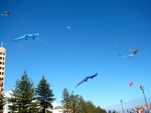 Glenelg Kite Record Royalty Free Stock Photos