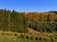 Glenkindie Forrest in Autumn Royalty Free Stock Photos