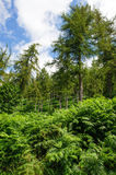 Glenmalure forest Royalty Free Stock Photo