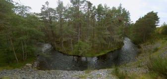 Glenmore Forest Park Scotland het UK royalty-vrije stock foto's