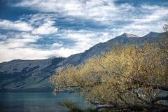 Glenorchy koloru żółtego liście w jesieni zdjęcie royalty free