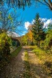 Gles början av skogen i tidig höst, Bratislava, Slovakien Royaltyfri Fotografi