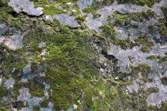 Gles mossa texturerad bakgrund på vagga fotografering för bildbyråer