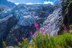 Gletscher von argentiere, Chamonix, haute Savoie, Frankreich Lizenzfreies Stockfoto