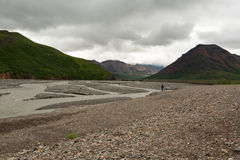 Gletscherflussbett im Gebirgstal in Denali-Park, Alaska Lizenzfreies Stockfoto