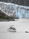 Gletsjer Alaska - Margerie Stock Afbeelding