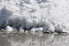 Gletsjer bij de rand van meer Royalty-vrije Stock Afbeelding