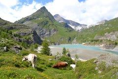 Gletsjer Pasterze van bergen de Oostenrijkse Alpen Royalty-vrije Stock Afbeelding