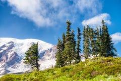 Gletsjer van MT Regenachtiger in de zomertijd stock fotografie