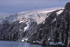 Gletsjer, vogelklippen en murres Stock Afbeelding