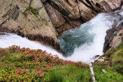 Gletsjerstroom en Alpiene rozen royalty-vrije stock afbeeldingen