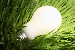 Glühende energiesparende Glühlampe auf grünem Gras Stockfotografie