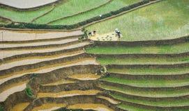 Gli agricoltori che lavorano al riso sistemano in Yen Bai, Vietnam Fotografie Stock