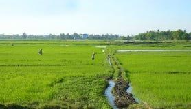 Gli agricoltori che lavorano nel riso sistemano in Da Nang vietnam Fronti irriconoscibili non identificabili Fotografia Stock