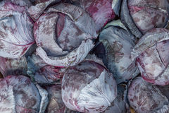 Gli agricoltori commercializzano il fondo del cavolo rosso Fotografia Stock Libera da Diritti