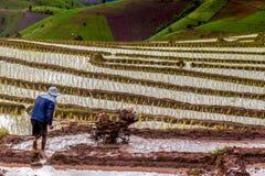 Gli agricoltori del riso su riso sistemano su a terrazze in Tailandia del nord, ja di Mae Fotografie Stock