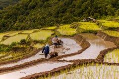 Gli agricoltori del riso su riso sistemano su a terrazze in Tailandia del nord, ja di Mae Immagine Stock