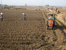 Gli agricoltori del Vietnam lavora in un giacimento del riso con il trattore Immagine Stock