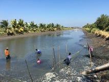 Gli agricoltori della Tailandia stanno raccogliendo il pesce dal loro stagno con una rete da pesca in Chachoengsao Immagini Stock Libere da Diritti
