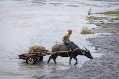 Gli agricoltori filippini che guidano un'acqua intimoriscono il carretto lungo il campo vulcanico Immagine Stock