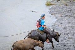 Gli agricoltori filippini che guidano un'acqua intimoriscono il carretto lungo il campo vulcanico Fotografia Stock