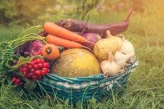 Gli agricoltori hanno raccolto varie verdure nella fine dell'estate nel giardino organico Alimento sano e sostenibile Autunno cop Immagine Stock