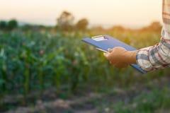 Gli agricoltori hanno sperimentato con cereale crescente Immagine Stock