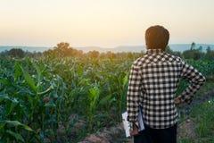Gli agricoltori hanno sperimentato con cereale crescente Fotografie Stock Libere da Diritti