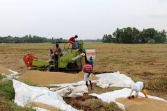Gli agricoltori non identificati fanno i lavori dopo il raccolto nelle loro risaie Fotografie Stock Libere da Diritti
