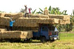 Gli agricoltori portano la paglia della risaia fino al camion agricoltura Fotografia Stock