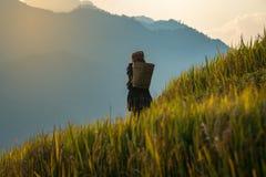 Gli agricoltori posteriori che portano il canestro sono stato sui terrazzi del riso Fotografia Stock