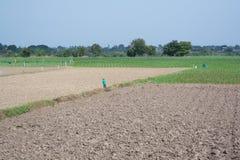 Gli agricoltori preparano i loro propri diagrammi Fotografie Stock
